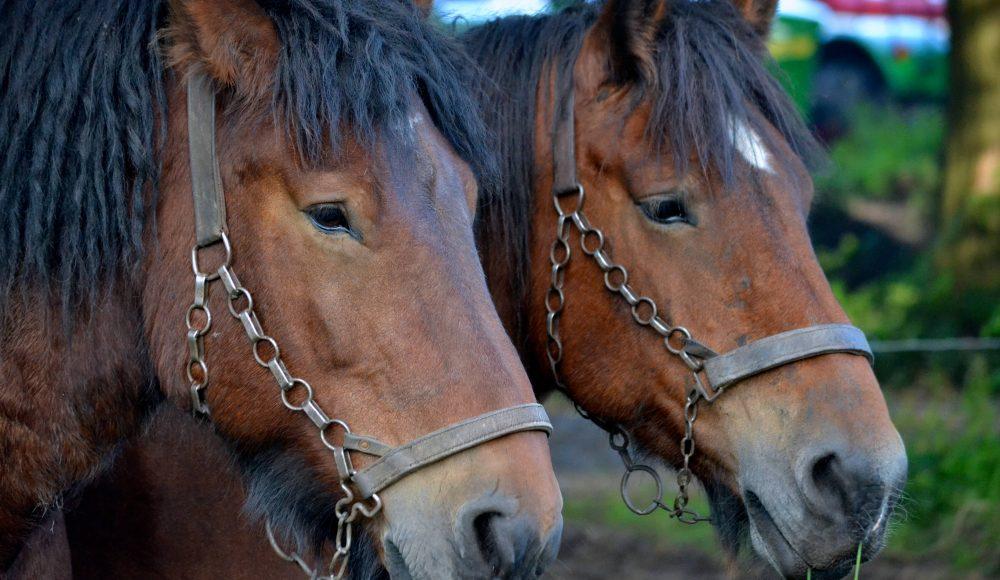paarden ringrijden