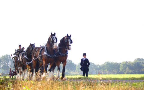 Optocht paarden