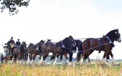 Achtspan paarden optocht